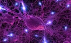 117233951-neurons