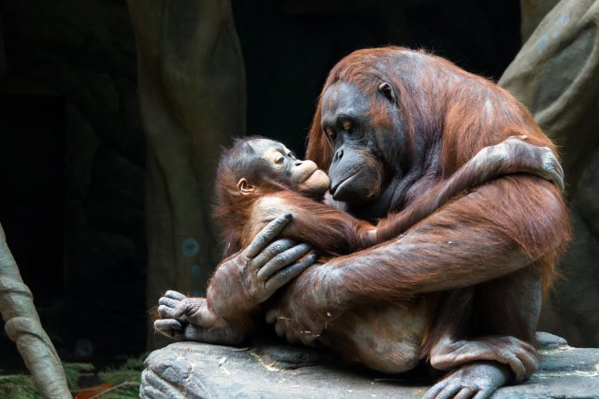 52167animal-mother-love-pictures
