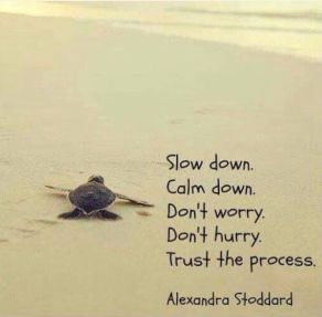 8572bb9f59761c6a0e0fd7d71db6707a--turtle-quotes-words-quotes