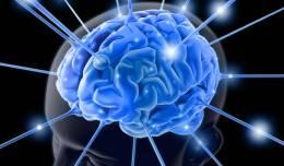 cerebro-inteligencia-20120801-01-original9