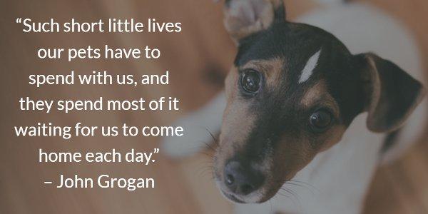 short-little-lives