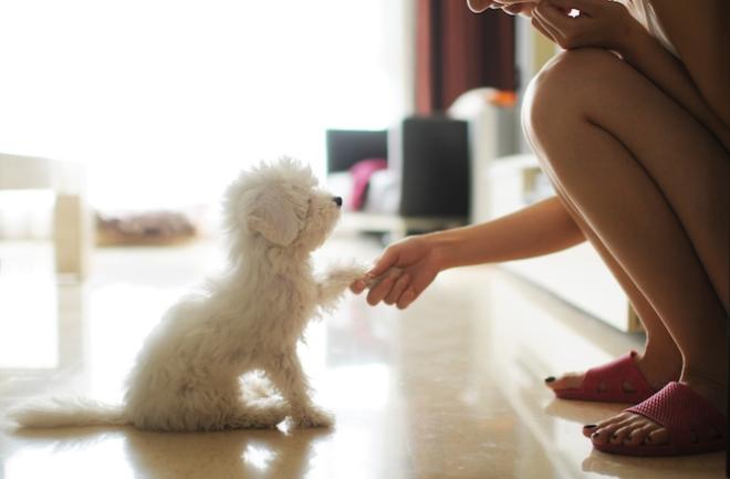 small-white-dog-breeds-main