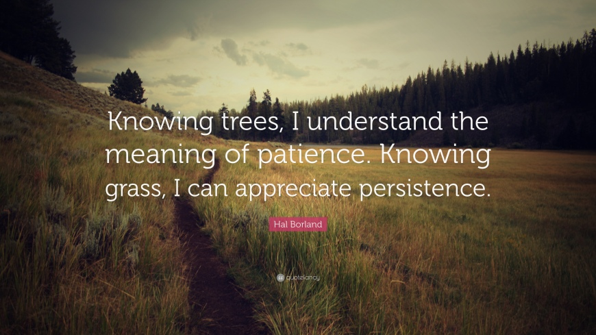 17623-Hal-Borland-Quote-Knowing-trees-I-understand-the-meaning-of