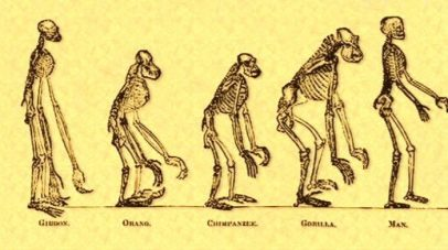 CFAC-icon-march-of-apes-to-man-700x392